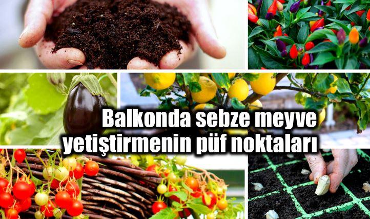 Balkonda sebze meyve nasıl yetiştirilir?