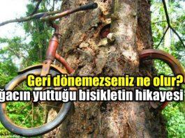 Geri dönemeyenler: Ağacın yuttuğu bisikletin hikayesi