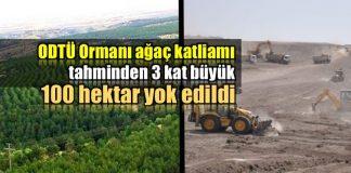 ODTÜ ormanı ağaç katliamı: 100 hektar alan yok edildi