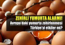 zehirli yumurta Avrupa yumurta zehirlenmesi Türkiye