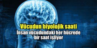 Vücudun biyolojik saati nedir? Nobel Tıp Ödülü alan çalışma