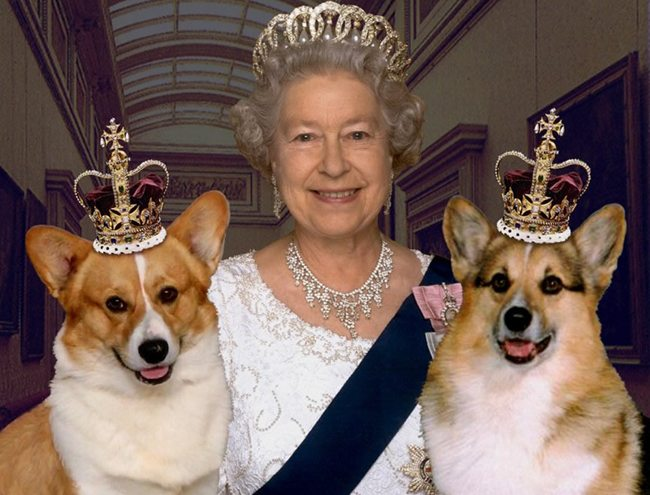 Kraliçe köpeklerini gerçekten her yere götürür