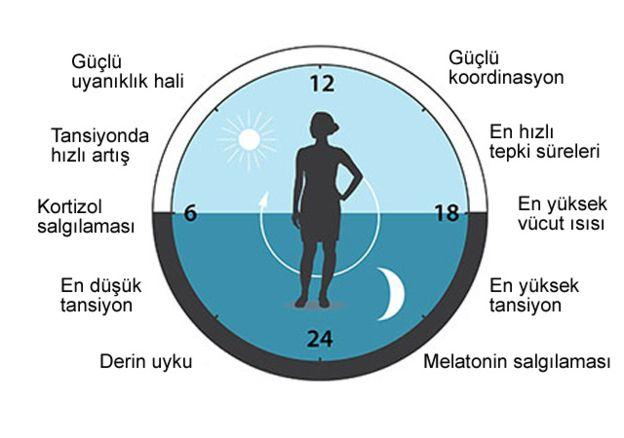 Nobel Fizik Ödülü: 3 bilim insanı ve vücudun biyolojik saati
