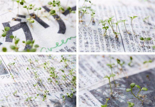 Bir gazete düşünün. Ağaç kesilmeden üretilmiş. Ancak bununla da bitmiyor. Bu gazete toprağa ekildiğinde filizler veriyor. Nasıl mı?