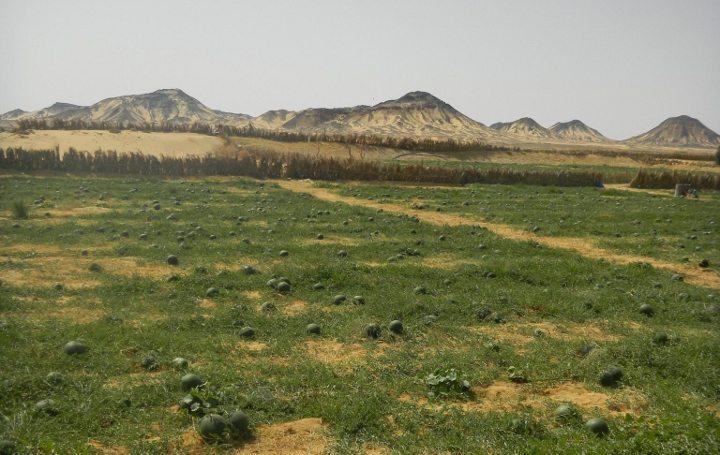 çölün kutsal kalbinde mısır çöl gezisi