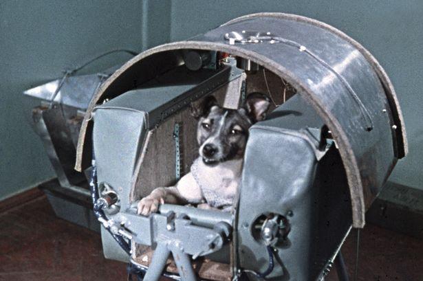 layka sputnik 2