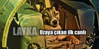 Layka: Uzaya gönderilen ilk canlı olma özelliği taşıyan köpek