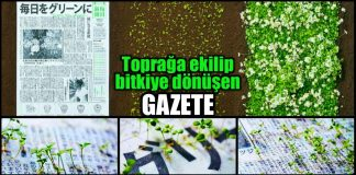 toprağa ekilip bitkiye dönüşen tohum gazete Mainichi Shimbunsha japonya