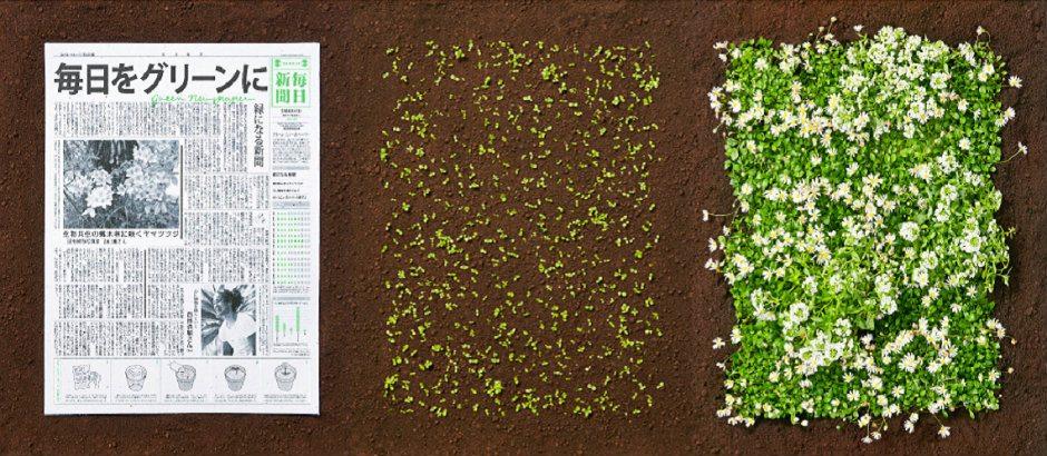 Toprağa ekilip bitkiye dönüşen gazete
