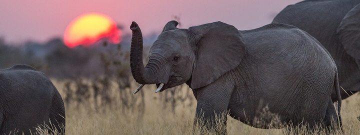 uyku karabasan kabus rüya rem gece terörü uyku apnesi nedir filler