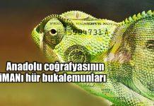 Anadolu coğrafyasının iMANı hür bukalemunları
