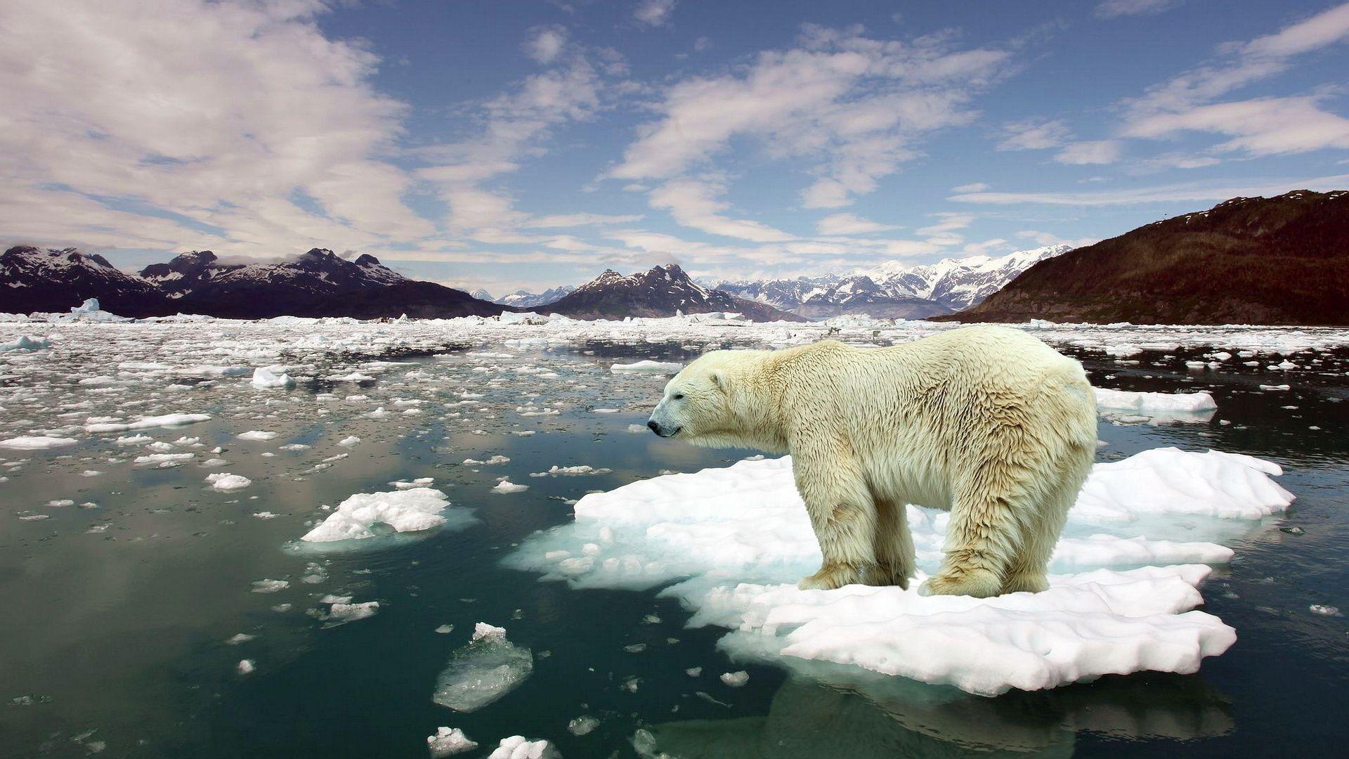 İklim değişikliği sadece bizi değil, bütün canlıları tehdit etmektedir.
