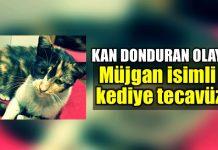 İstanbul Gaziosmanpaşa bağlarbaşı kediye tecavüz