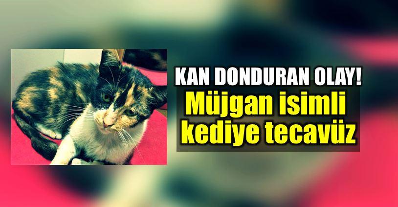 İstanbul Gaziosmanpaşa bağlarbaşı kediye tecavüz istanbul müjgan