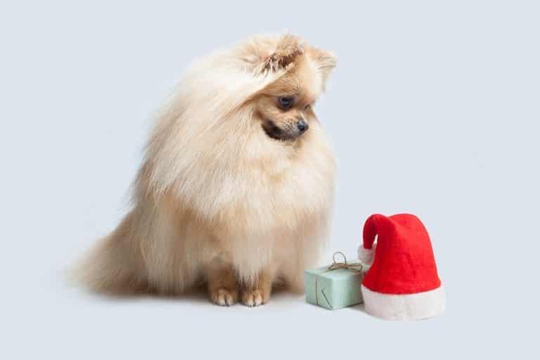 çin astrolojisi köpek yılı astroloji türkiye