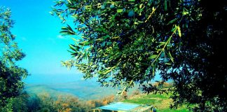 İmece Evi: Ekolojik komün çiftlik yeni sakinlerini bekliyor