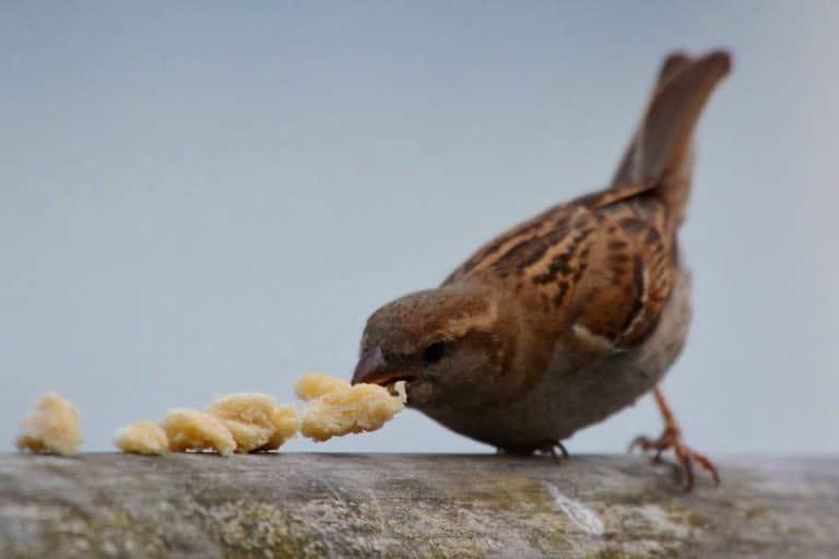 kuşları besleyin