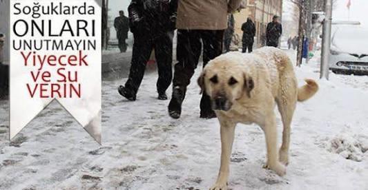 soğuk havalarda hayvanları unutmayın