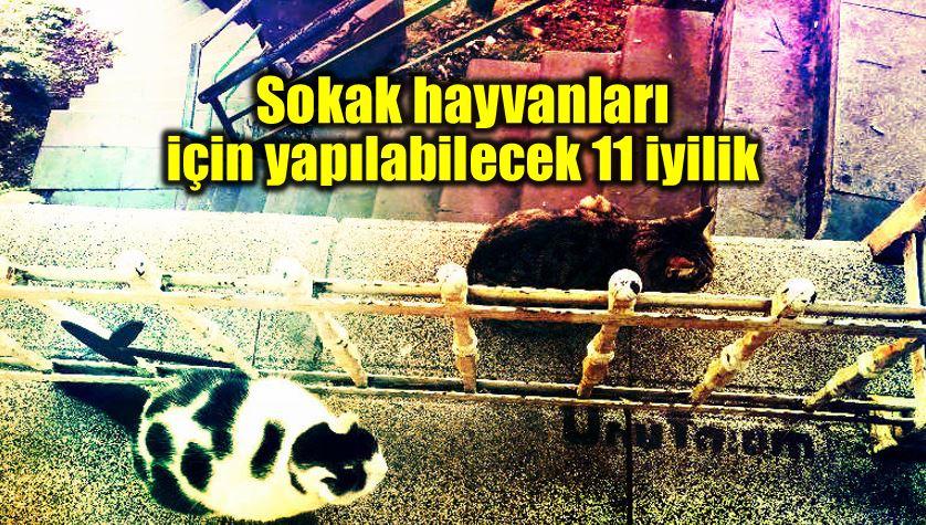 Sokak hayvanları için yapılabilecek iyilikler kadıköy belediyesi