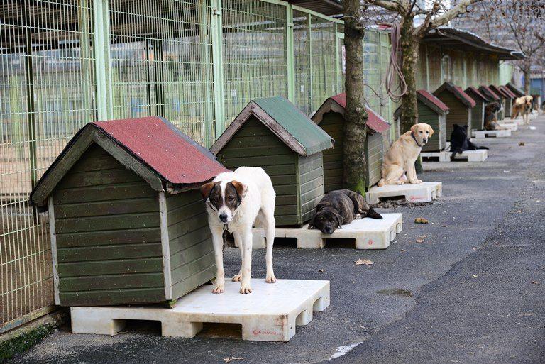 sokak hayvanları hayvan barınağı kedi köpek