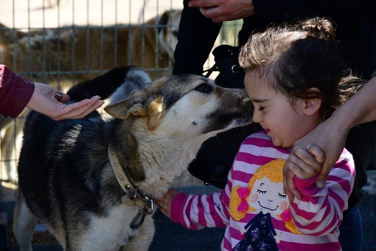 sokak hayvanları sevgi çocuk