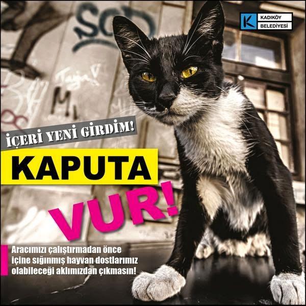 sokak kedisi kediler Arabanızın kaputuna vurun