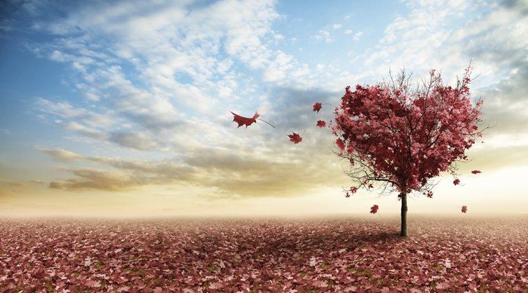 14 şubat sevgililer günü aşk evlilik ilişki sevgi hediye