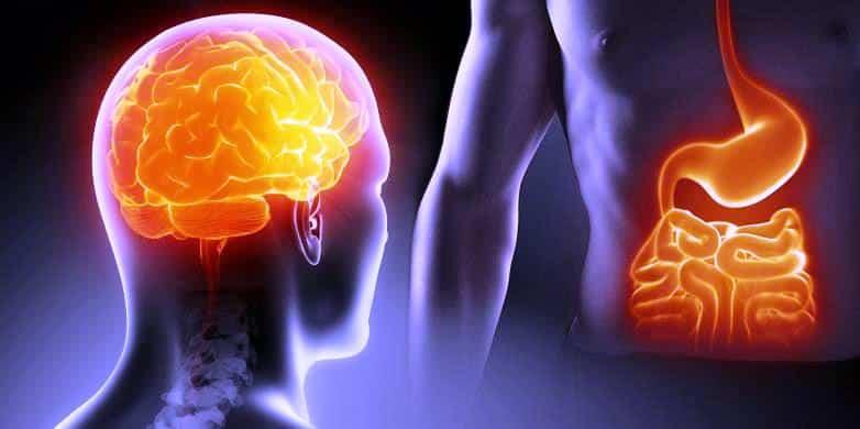 bagirsak-florasi-mikrobiyota-alzheimer-parkinson-ikinci-beyin