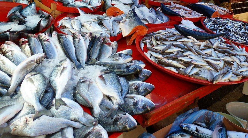 Balığın faydaları neler? Yüksek Omega 3 kaynağı balık
