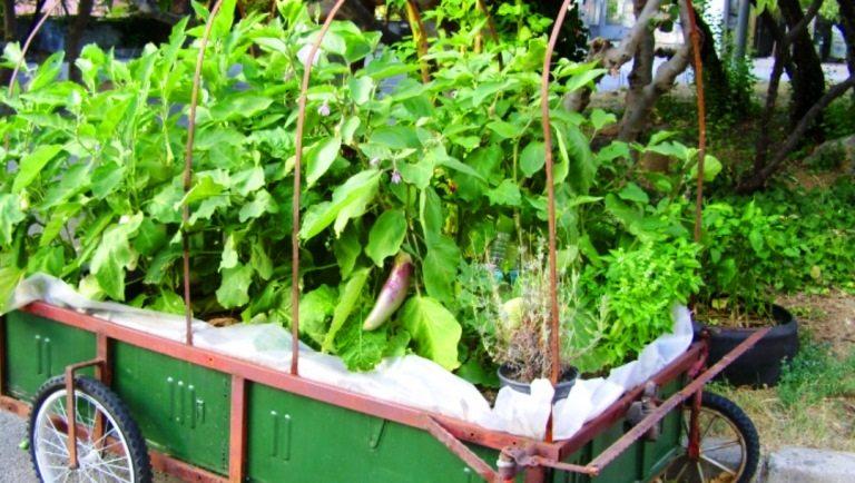 Ekolojik sanat ve organik heykel: Doç. Dr. Alaattin Kirazcı bahçe