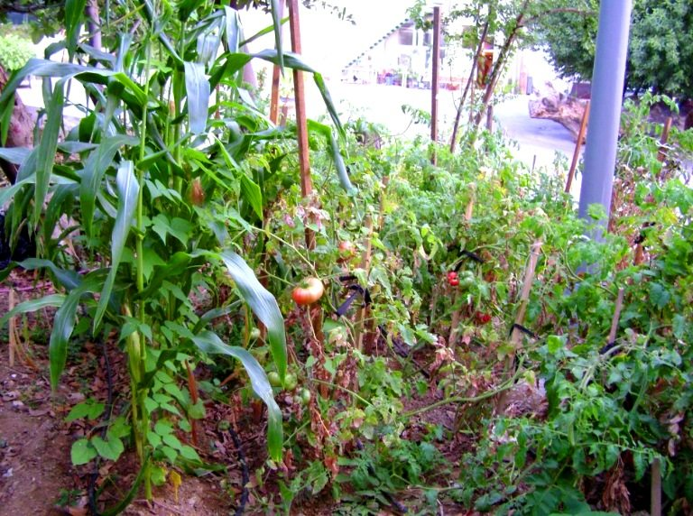 Ekolojik sanat ve organik heykel: Doç. Dr. Alaattin Kirazcı sebzecilik