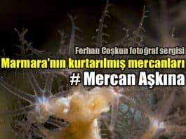 Mercan Aşkına: Ferhan Coşkun fotoğraf sergisi (Adamer projesi)