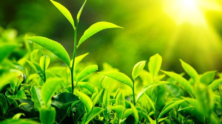 florür çay yaprakları