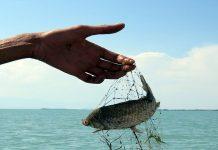 On iki balık türü beyşehir gölü'nde hayatta kalma mücadelesi veriyor.
