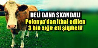 Deli dana skandalı: Polonya 3 bin hasta sığır eti ithal edilmiş