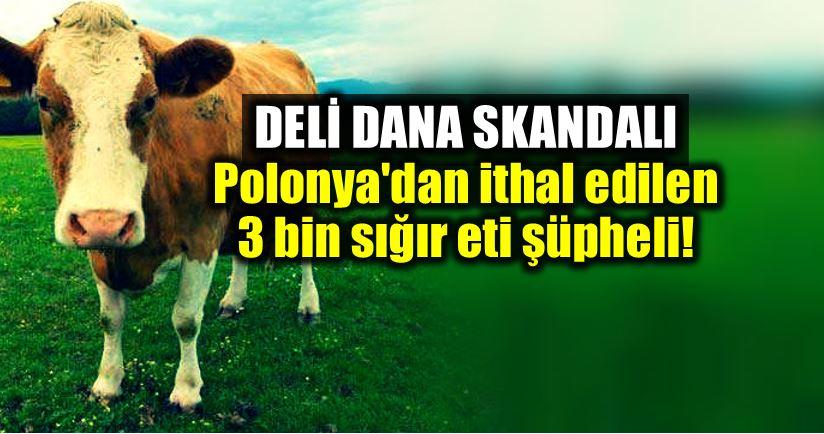 Deli dana skandalı: Polonya dan ithal edilen 3 bin sığır eti şüpheli!