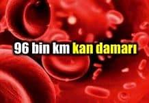 Neden iyi bir kan akışına ihtiyacınız var? kan damarı