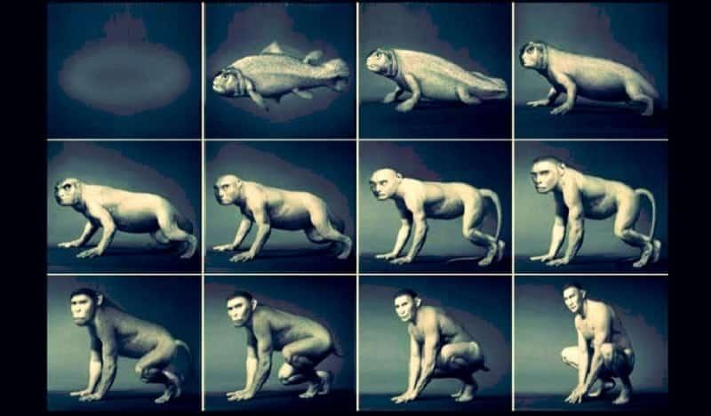 Evrim sadece bir teori ise neden bu kadar ciddiye alıyoruz ?