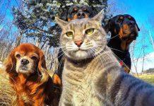 CHP mersin milletvekili Alpay Antmen hayvan hakları koruma kanunu teklifi