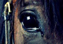 Büyükada faytona son, atlara özgürlük buluşması