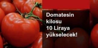domatesin kilosu 10 tl