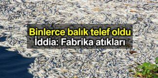Hatay Samandağ binlerce balık telef oldu