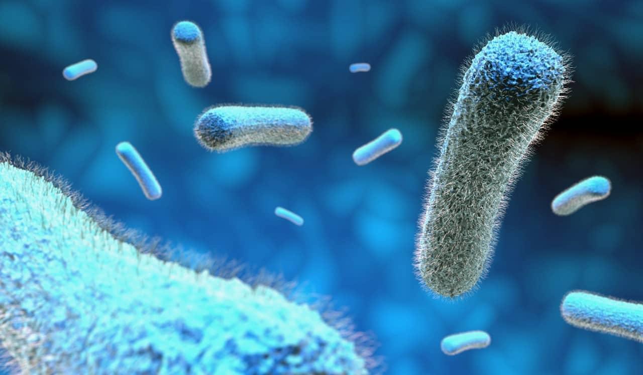 iyi bakteriler