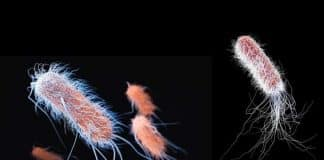 Süper bakteriler ile savaşmanın ipuçları