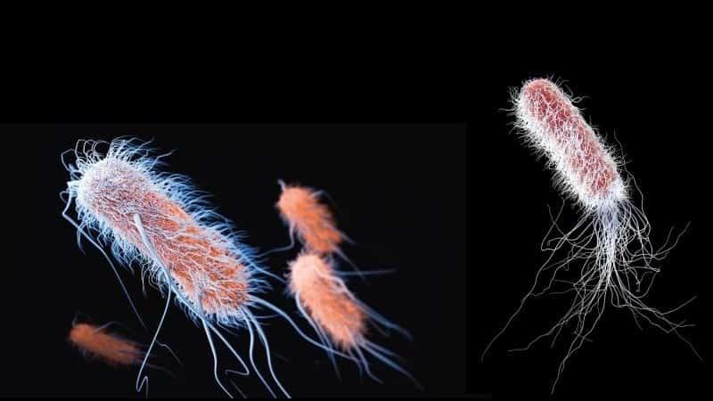 Süper bakteriler ile savaşmak: Antibiyotik kullanımına dikkat!