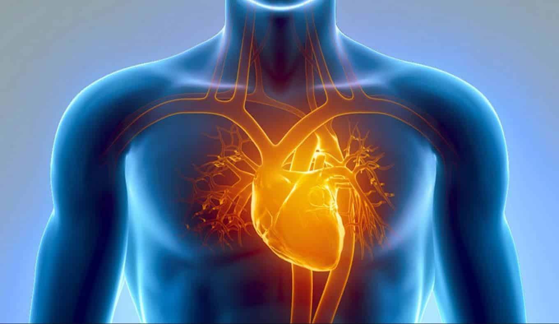 Kalp damar