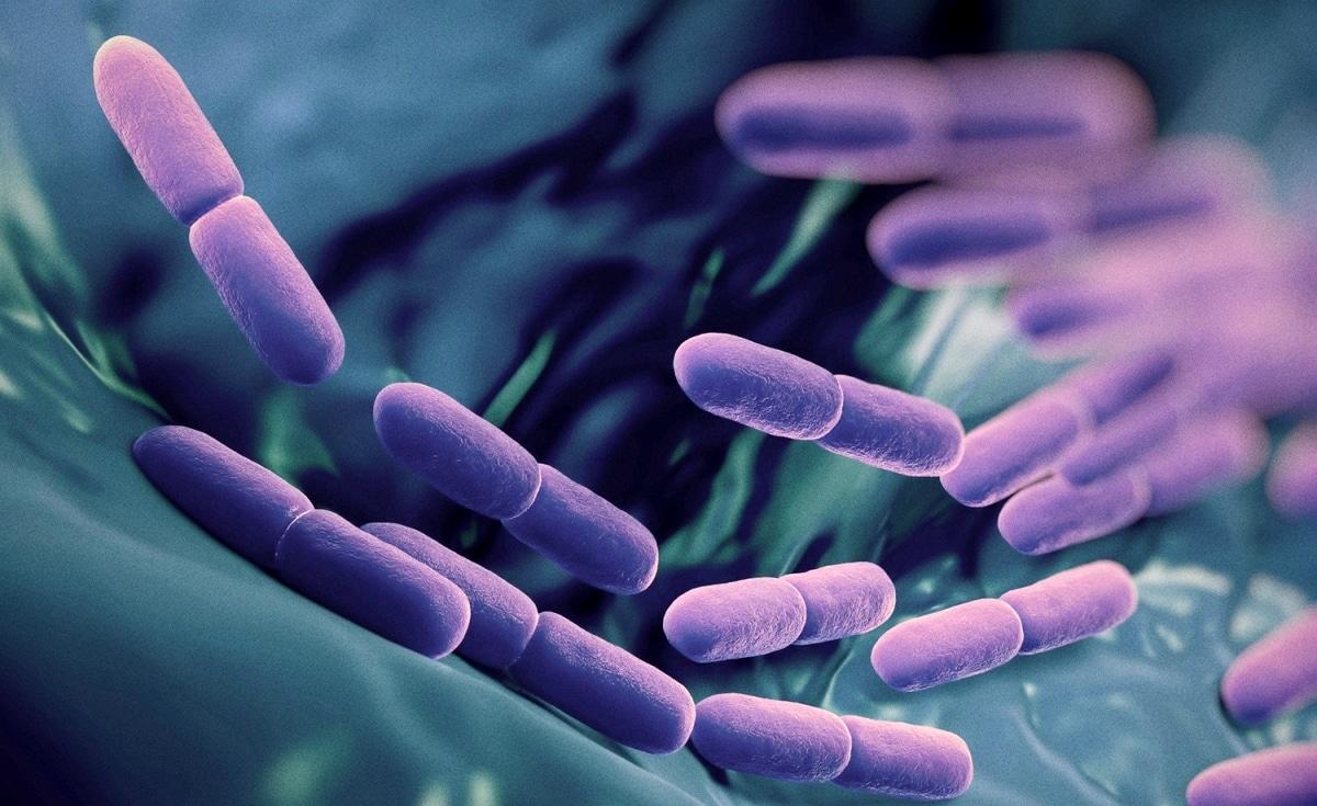 Probiyotikler: Bağırsak dostu iyi bakteriler