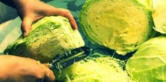 Bağırsak florası için probiyotik lahana turşusu tarifi