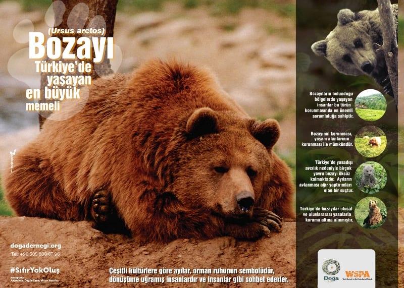 Bozayılar (Ursus arctos) Türkiye Doğa Derneği