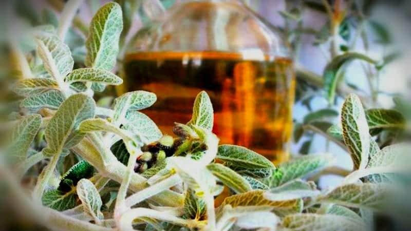 ada çayı tarifi ile ilgili görsel sonucu